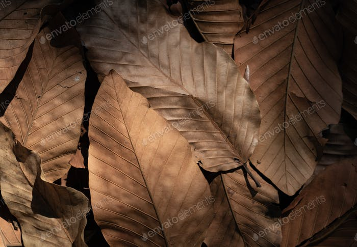 Background of dried leaves in autumn