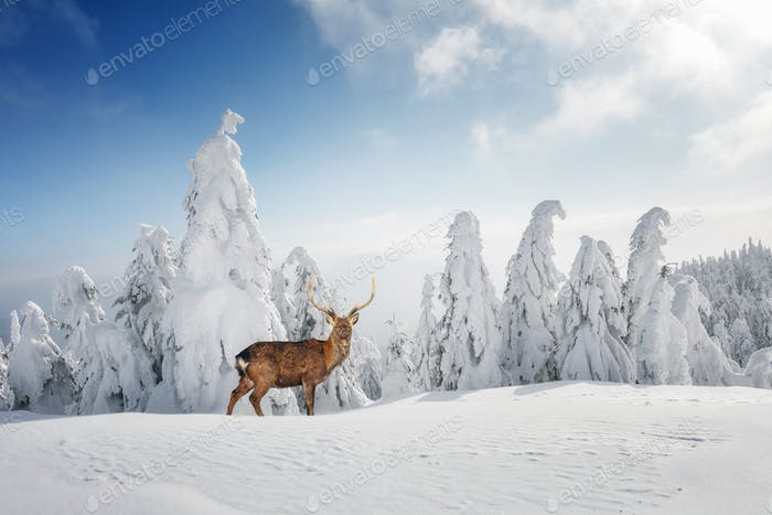 Fantastic winter landscape with snowy trees and wild deer