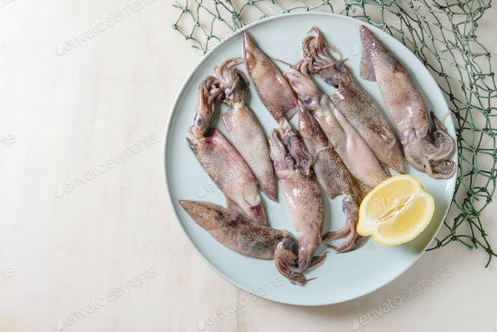 Raw squids calamari
