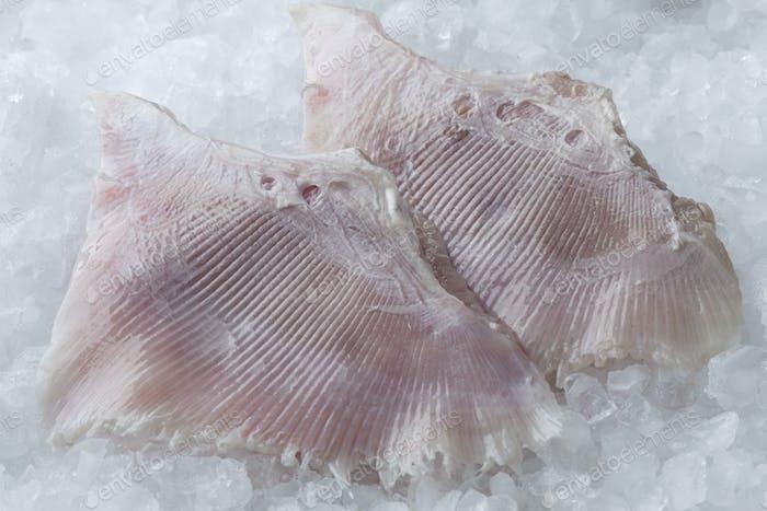 Fresh skate fish wings