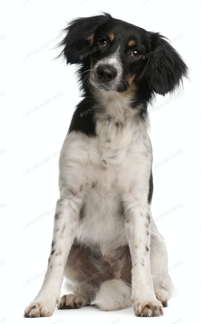Mixed-breed dog, 9 months old, sitting in front of white background
