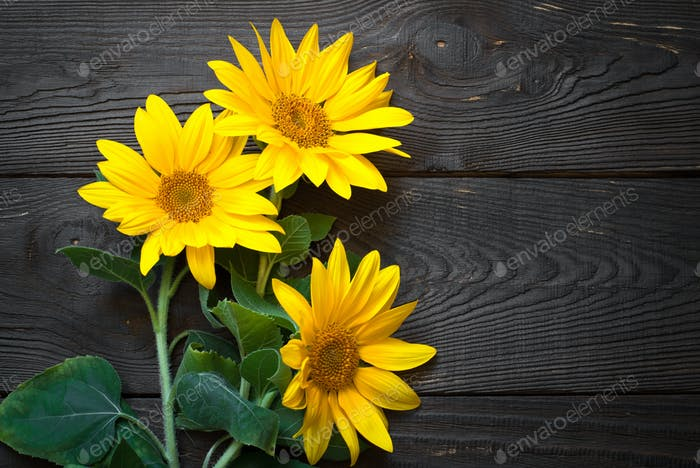 Sunflowers at wooden table.
