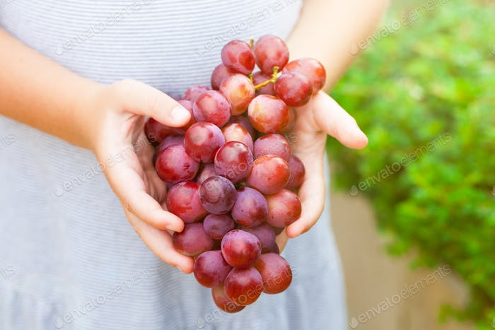 Red grape in little girl's hands. Summer garden background. Copy space