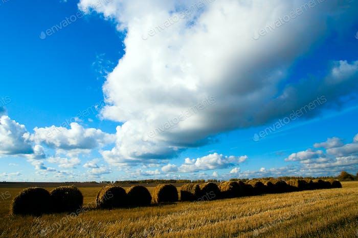 Stroh im Feld