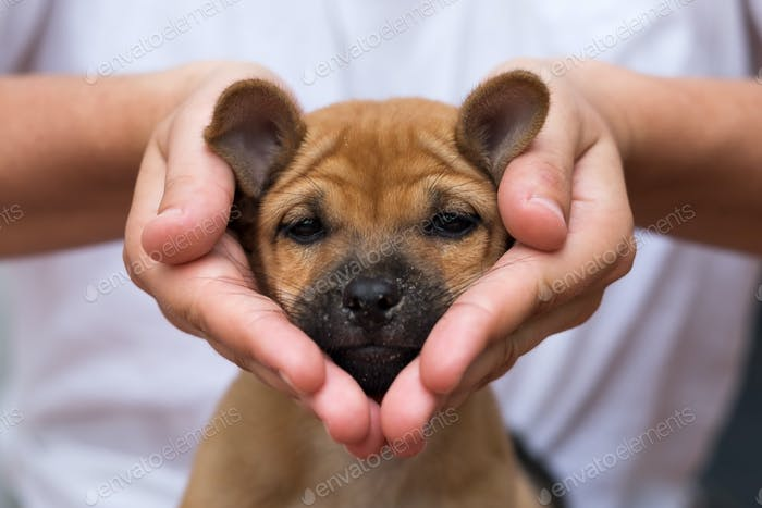 Girl holding puppy in her hands. His face is sad and looking like heart shape.