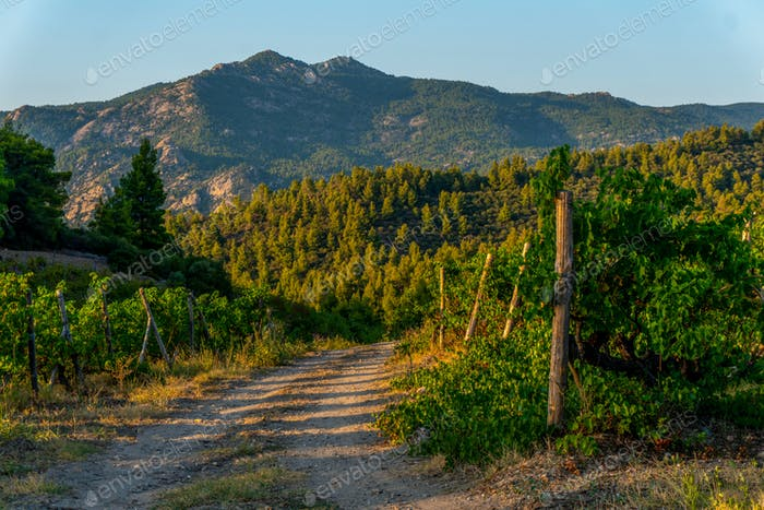 Straße und grüne Berge in Griechenland