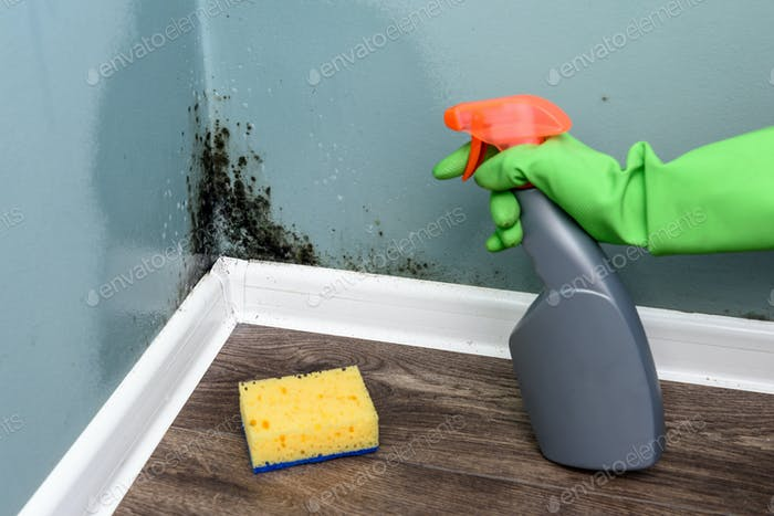 Spray bottle and sponge near black mould wall