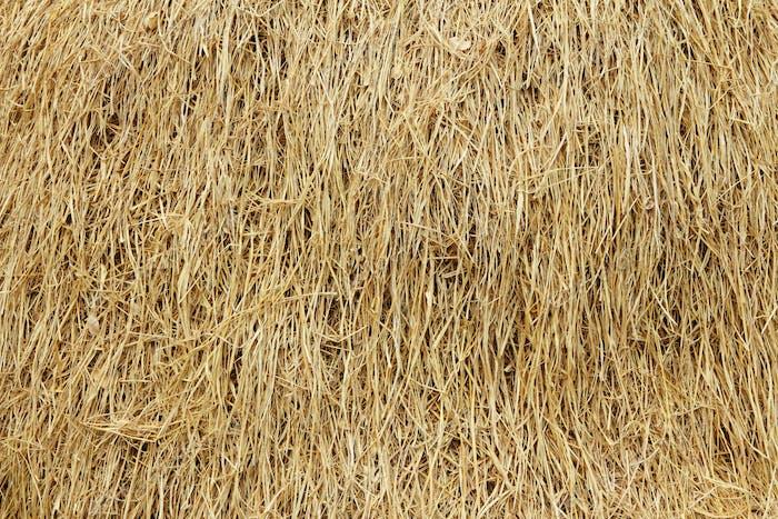 Dried reed