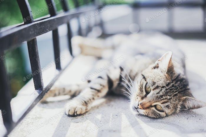 gray cat lying on the balcony