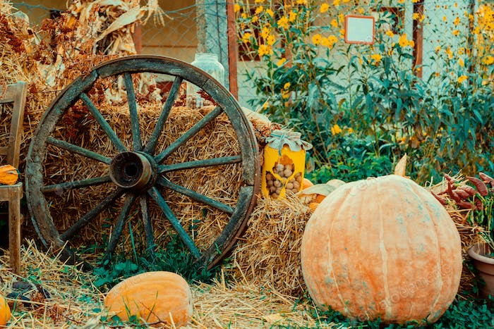 Autumn vintage decor with pumpkins