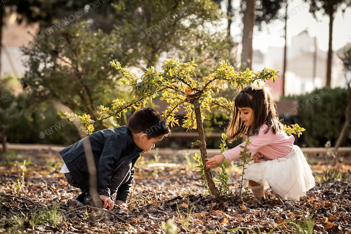 Little boy and girl playing and cultivating a tree in a park