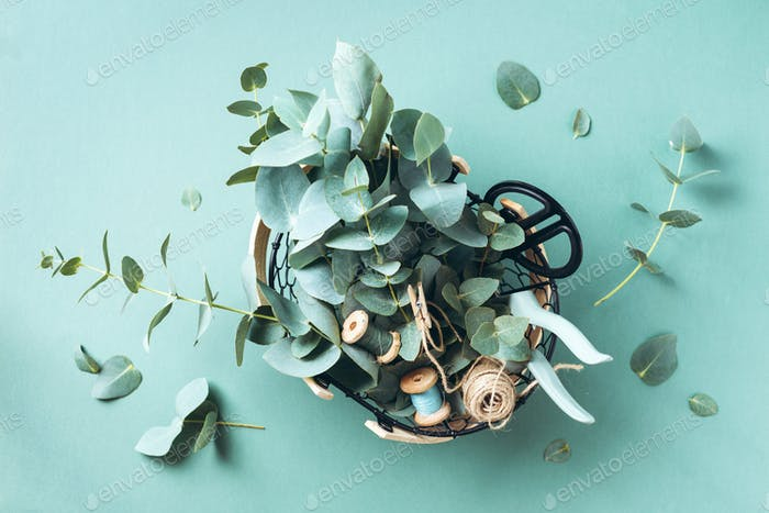 Basket with eucalyptus flowers, garden pruner, scissors over green background. Florist concept, top