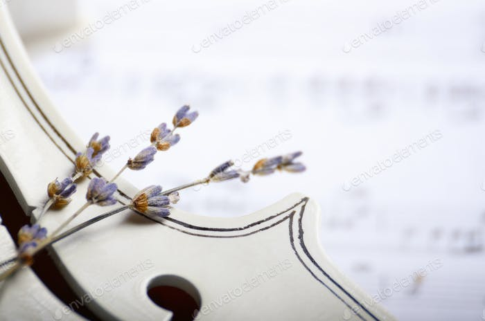 Close view of a violin musical notes and dry lavender on white w