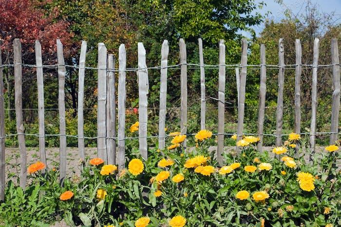 Flores delante de una valla