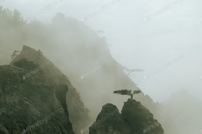 Fog mountains