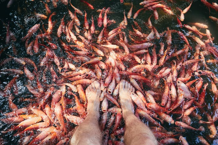 Natural fish spa therapy and foot massage