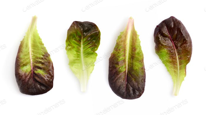 Fresh red lettuce leaves isolated on white background. Top view