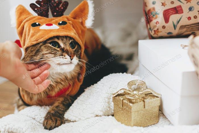 Hand caressing sweet tabby cat in cute reindeer costume under christmas tree, pet love