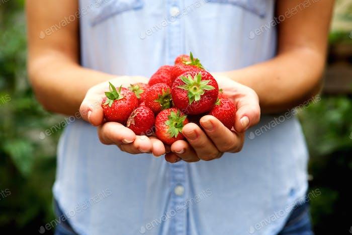 Handful of fresh organic strawberries