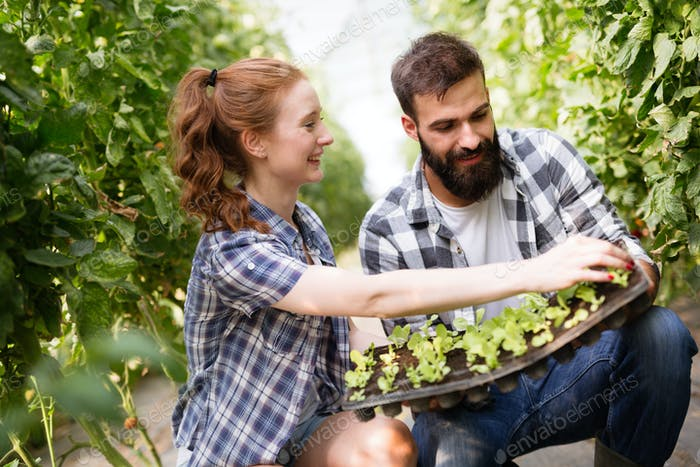 Image of couple of farmers seedling sprouts in garden