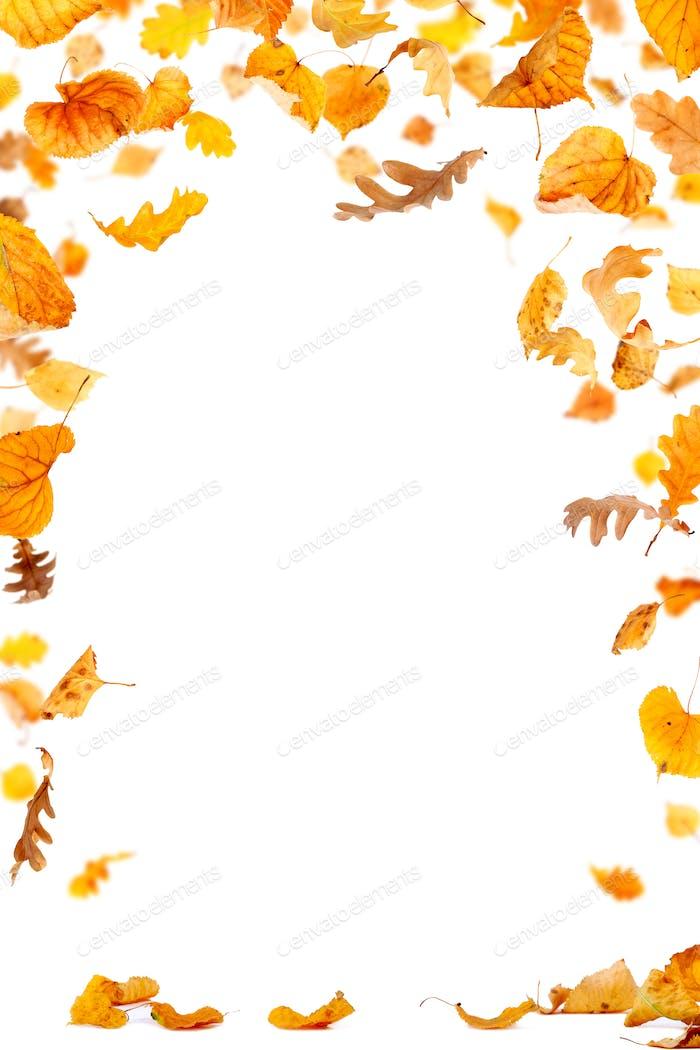 Falling Leaves Frame