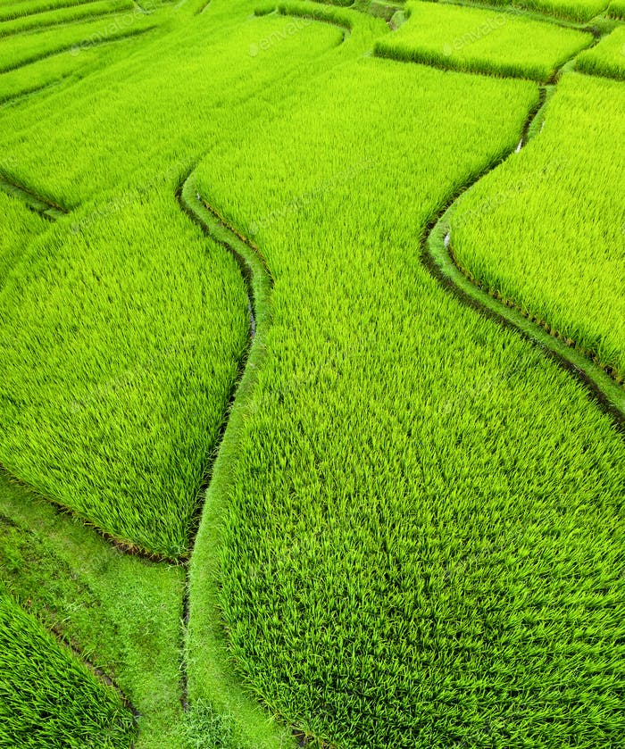 Air view of rice terraces, Bali, Indonesia