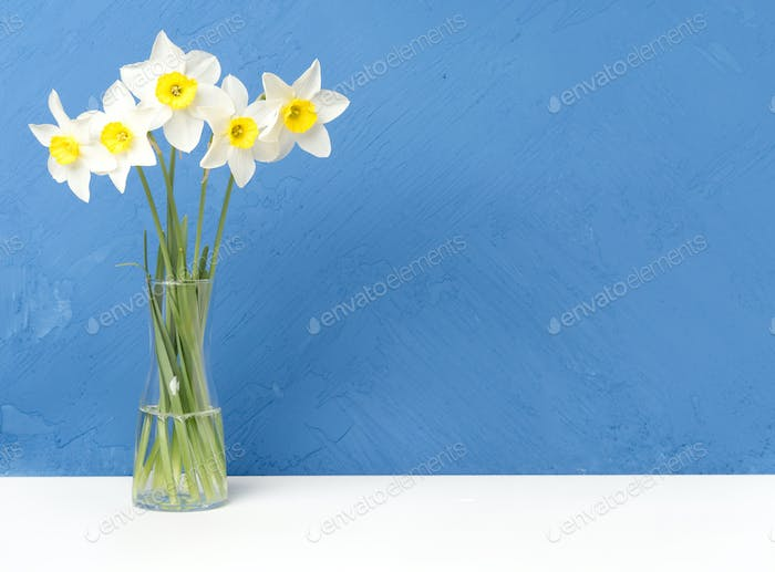 Bouquet of fresh flowers, daffodils in vase on white table, opposite blue textured concrete wall