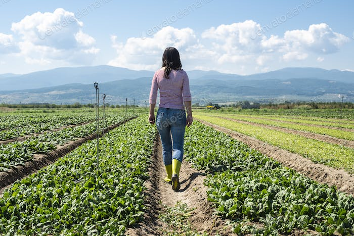 Woman with green boots walking on spinach field.