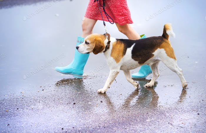 Thumbnail for Young woman in wellies walk her dog