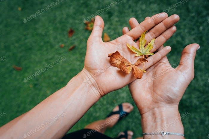 Yellow autumn leaves in the palm of a girl