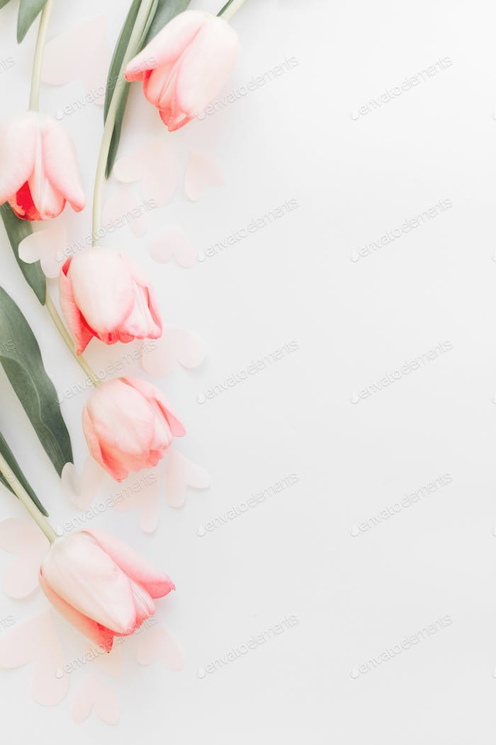 Pink tulips border flat lay on white background