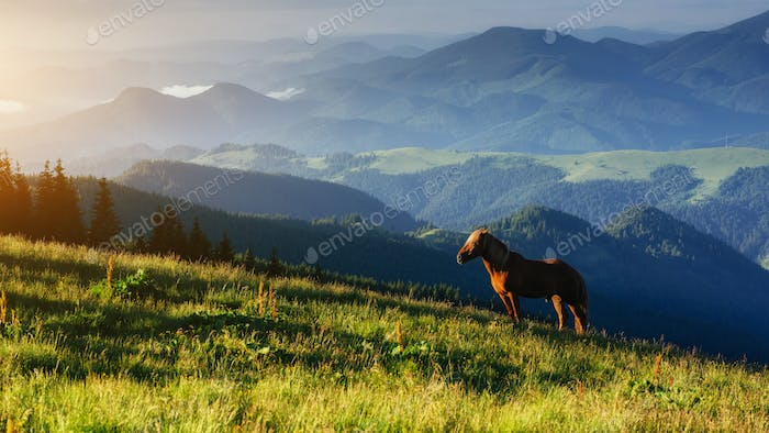 Riding in the mountains at sunset Beauty world