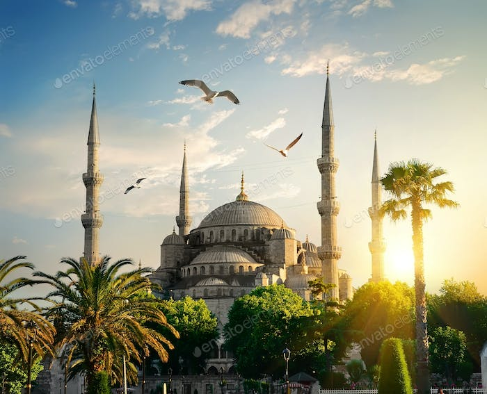 Blue Mosque at summer evening