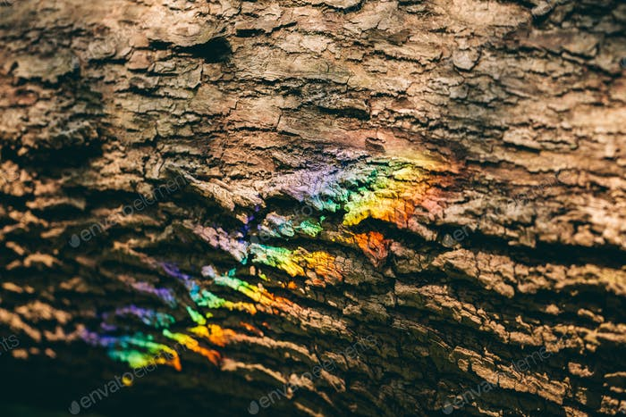 Colorful rainbow reflecting on a bark of a tree.