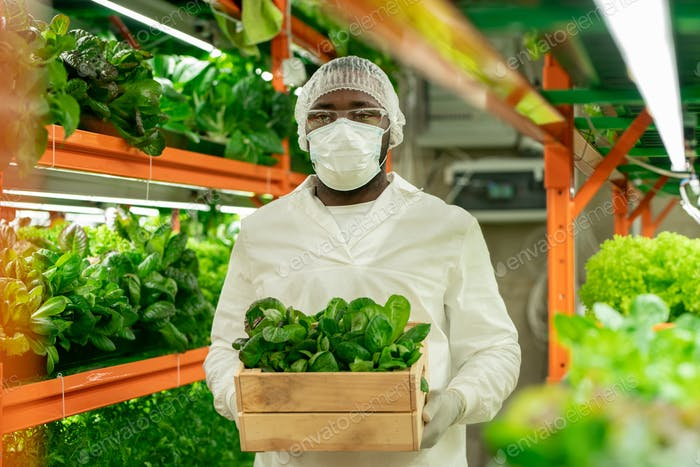 African-American greenhouse employee replacing seedlings