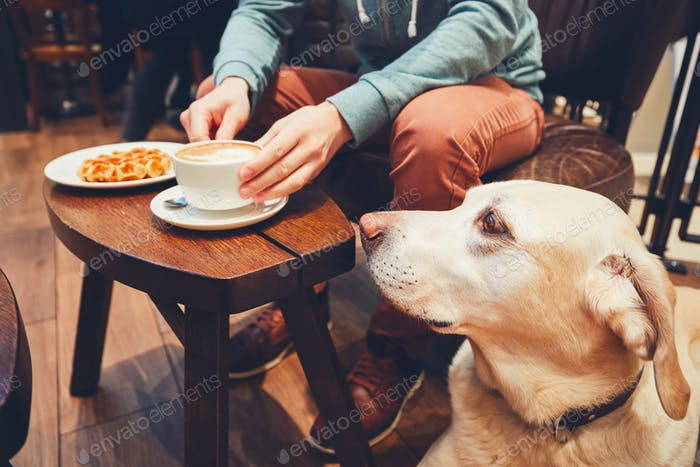 Curious dog in the cafe