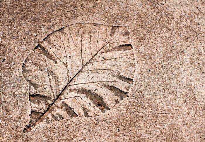 Leaf print on the cement floor
