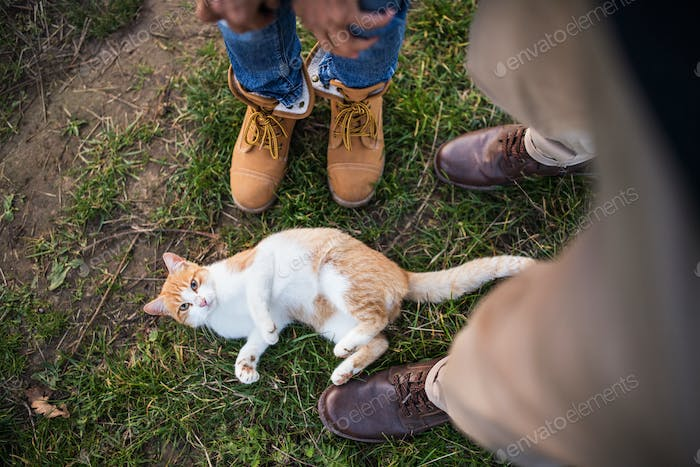 A cat on the grass and legs and feet of senior unrecognizable couple outdoors.