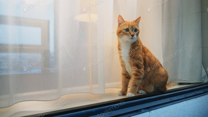Red cat sitting by the window