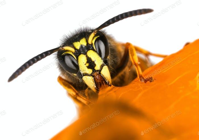 Wasp face macro