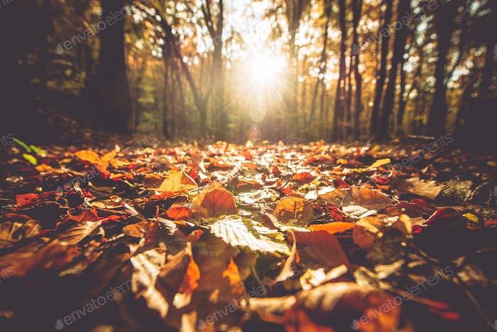 Golden Autumn Foliage