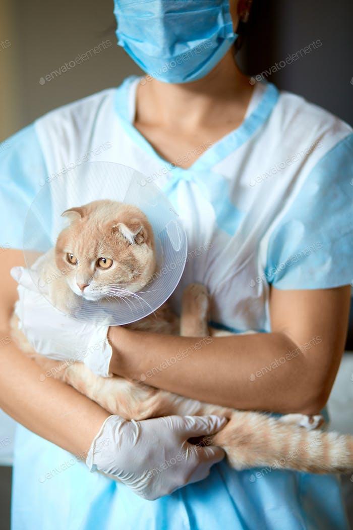 Tierärztin hält eine Katze mit Plastikkegelhalsband an den Händen