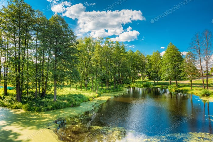 Scenic View Of Summer Sunny Forest Woods And Wild Bog. Nature. N