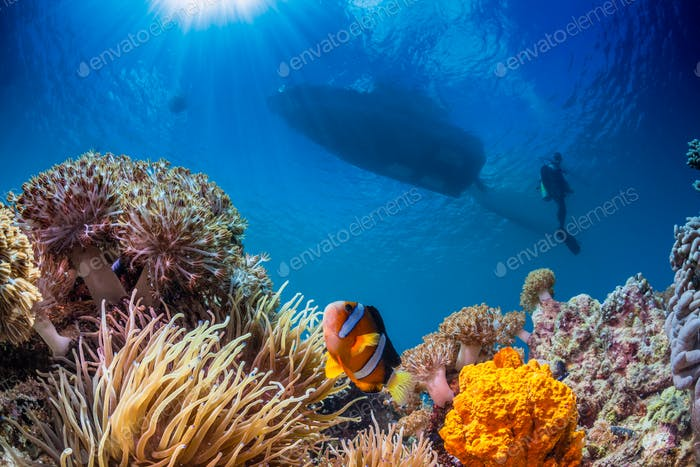 underwater seascape