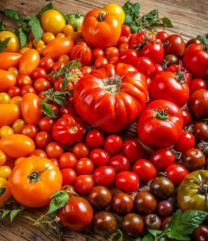 Bunte Bio-Tomaten