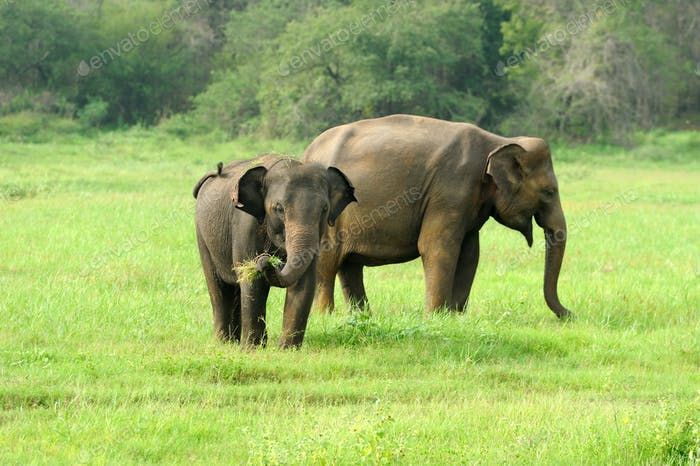 Thumbnail for Elephants in National Park