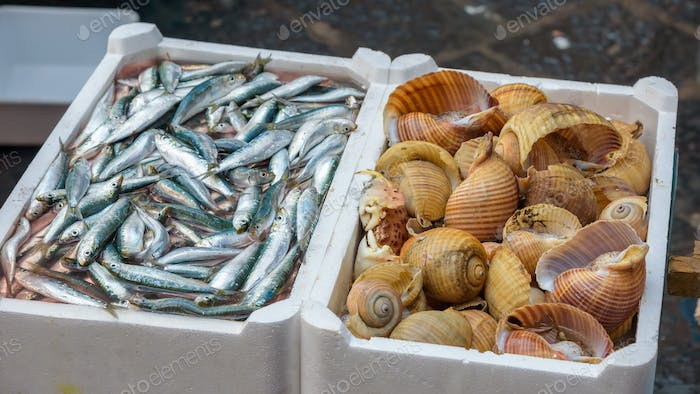 Sprat and sea snails on the fish market