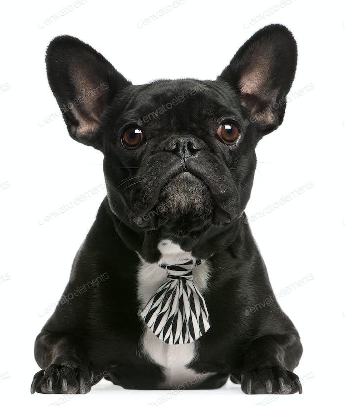 French Bulldog (3 years old), French Bulldog (5 years old)