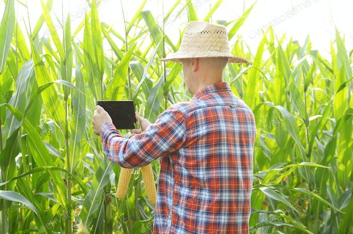 Landwirt mit Tablet-Computer für die Inspektion Mais Feld. Ha