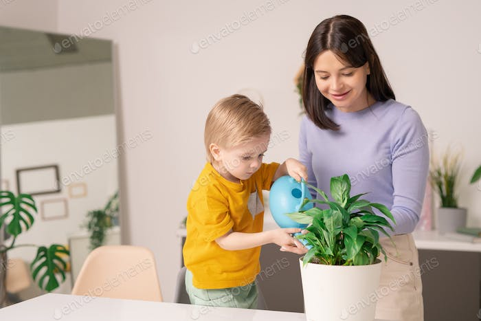 Watering domestic plant